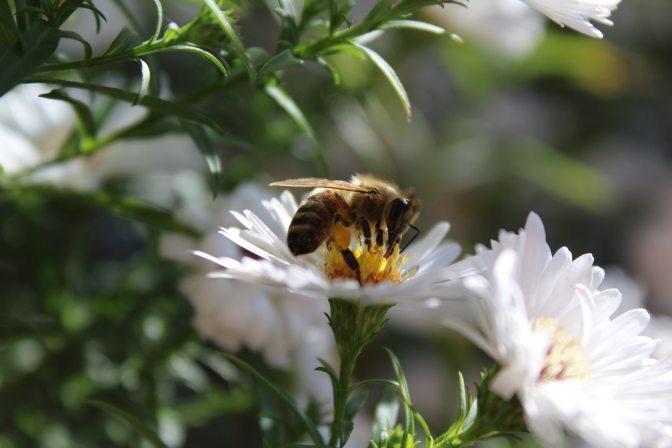Introducing 2018 Garden of Fire – Powerful Pollinators