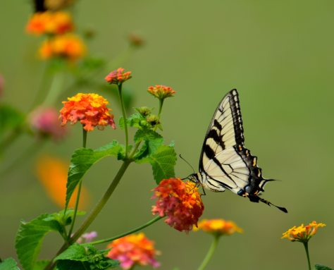 bloom-blossom-butterfly-158617.jpg